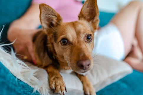 Hund bei Businessporträt von Anke Behrens Lifecoach